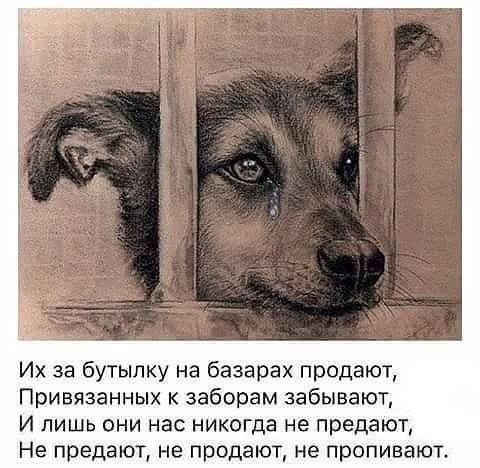 Собака не предаст