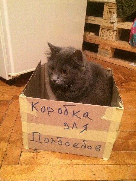 Штрафная коробка