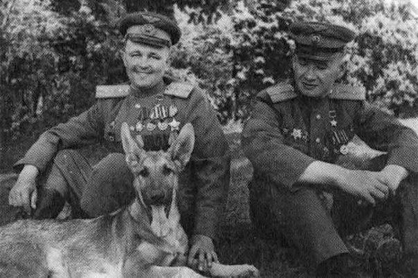 Собака которую несли на кителе Сталина