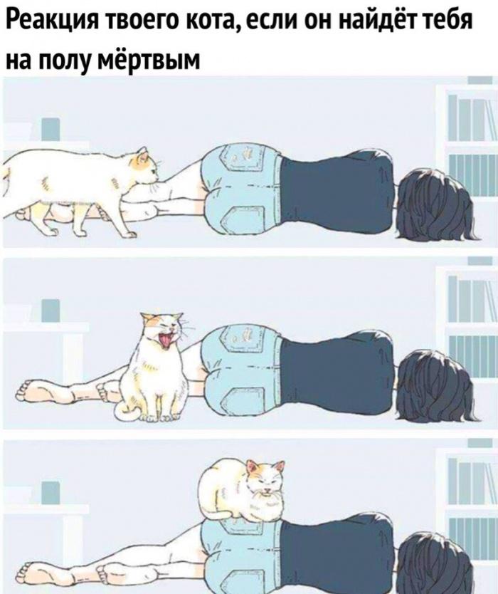 Коты в своем репертуаре