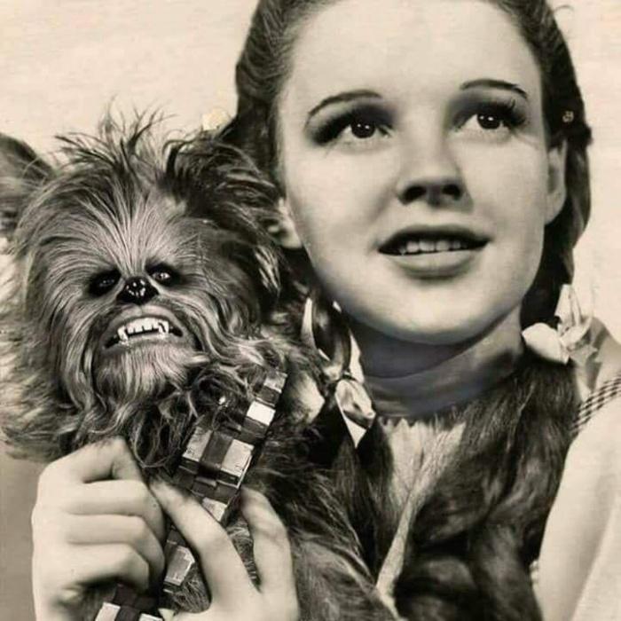 При всей моей ненависти к маленьким собачкам