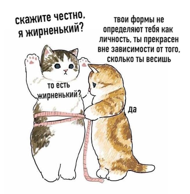Жирный котик