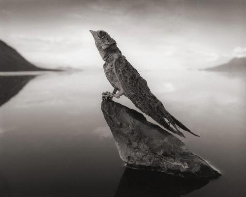 Феномен озера Натрон