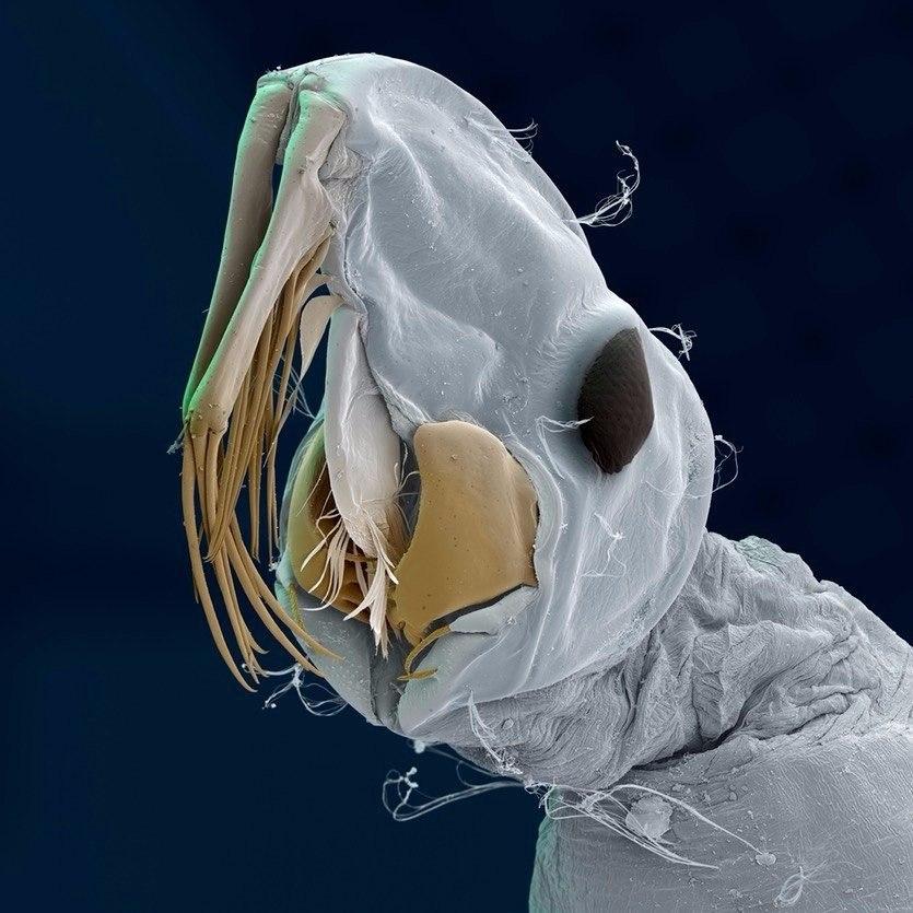Занятная паразитология