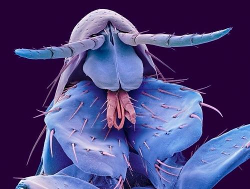 Микроскопические соседи по квартире