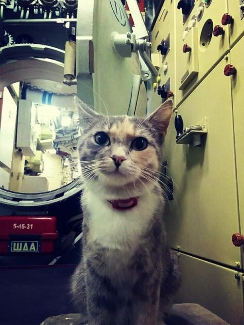 Кошка Муся, живущая на подводной лодке