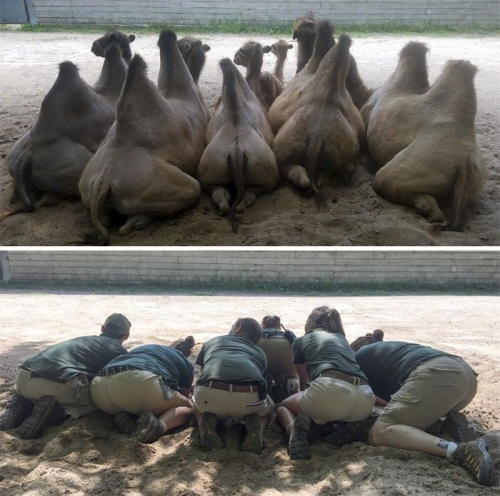 Троллинг в зоопарке