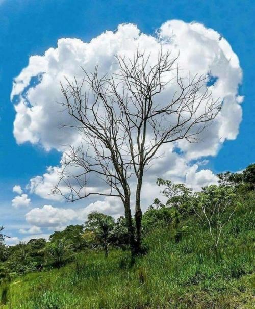 Облачное дерево.