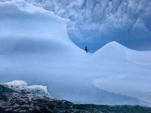 Море и айсберги, Южная Георгия.