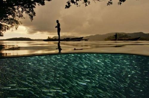 На вершине пролива Дамир можно увидеть зеркальную поверхность воды, а под ней просто кишит рыба.