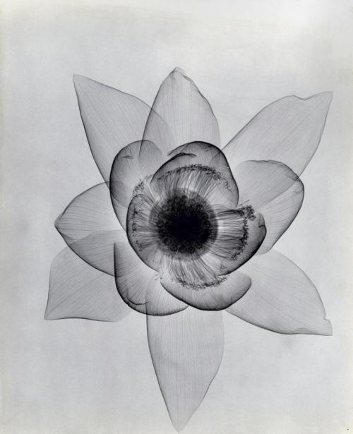 Рентген цветов.