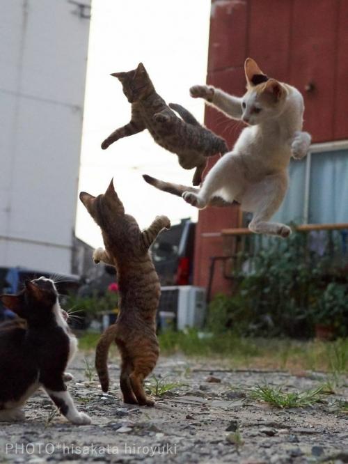 Коты ниндзя