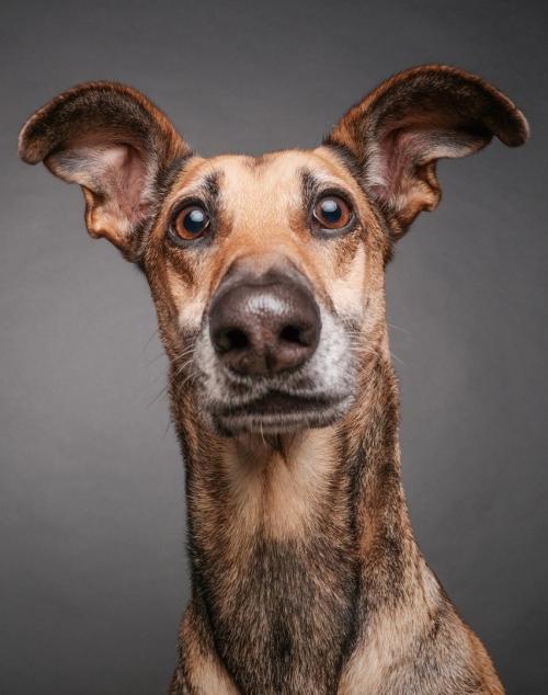 О чем думает ваша собака?