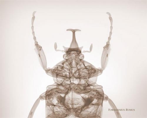 Фотограф-рентгенолог показывает мир насекомых изнутри