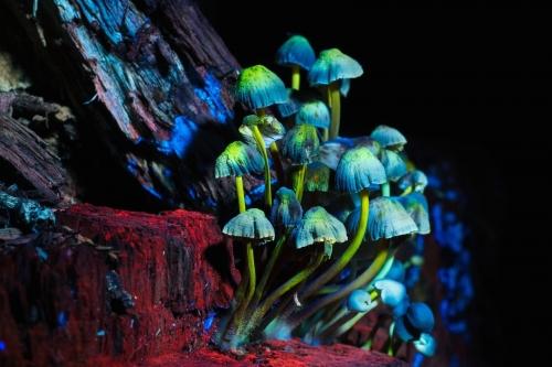 Hoчной лес в ультрафиолете