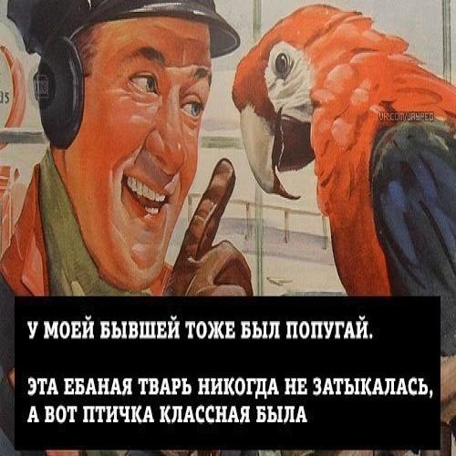 Классная птичка