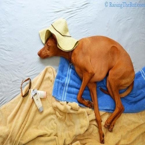 Фотографии спящей собаки
